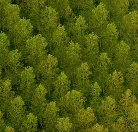 L'arbre et sa disparition au cœur des préoccupations environnementales et sociales