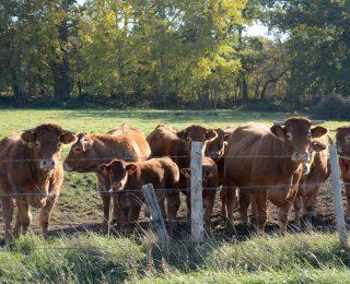 Quels avenirs pour les agricultures en Pays de la Loire?