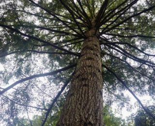 Arbre-Forêt du Gavre